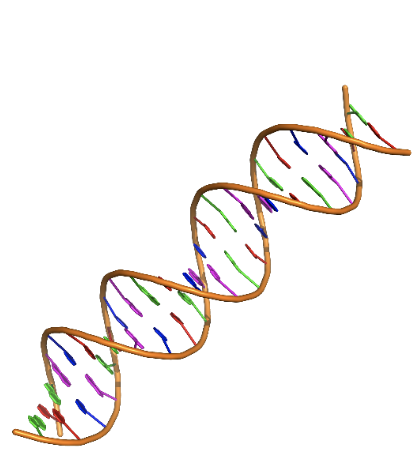 Object 3: Current DNA model